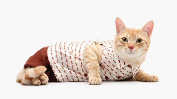 Cute Cat Pics! United Bamboo Releases 2011 Cat Calendar