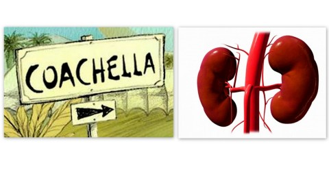 What's More Important: Your Kidney Or A Pass To Coachella? | StyleCaster