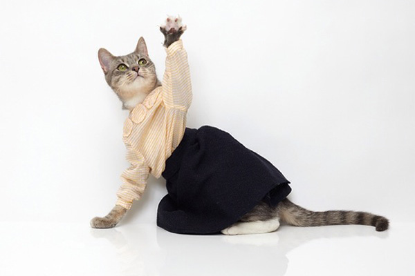 6 Cats That Dress Better Than You (Seriously)