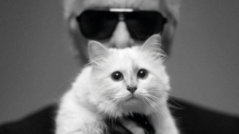 Karl Lagerfeld's Cat Choupette Prefers Goyard China and Gets Manicures | StyleCaster