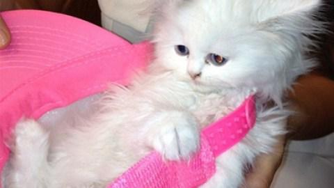 Kitten Klash: Kim Kardashian's Mercy Looks a Lot Like Lagerfeld's Choupette | StyleCaster