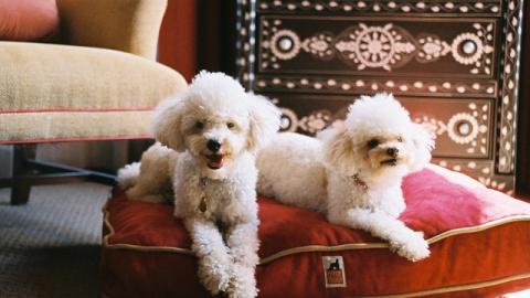 The Vivant's Top 10: Shopping Habits of World's Richest Pets and the Life of a Yacht Chef | StyleCaster