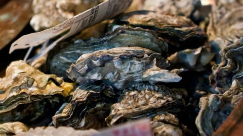 How to Order Oysters at a Restaurant Without Looking Clueless   StyleCaster