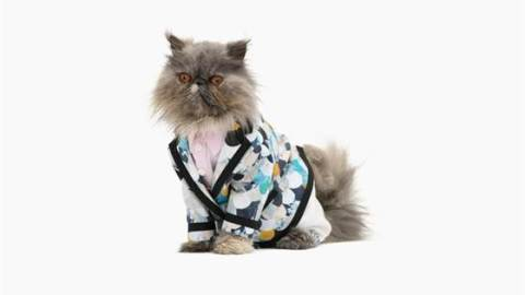 Get Excited: The Annual Cat Fashion Calendar Is Here | StyleCaster