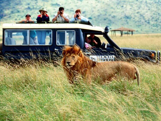 safari The Vivants Top 10: How To Safari and New York Citys It Lunch Spot