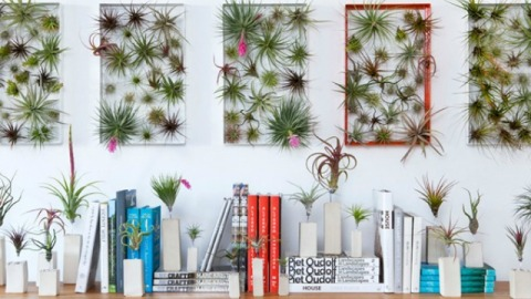 Stuff We Love: Airplant Frames Give New Meaning To Indoor Gardening | StyleCaster