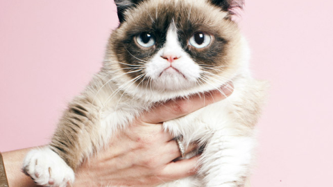 It's National Cat Day! Celebrate With The 15 Best Internet Moments Ever   StyleCaster
