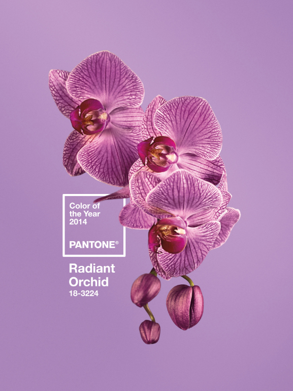 image001 Pantone Reveals The Color of 2014: Radiant Orchid