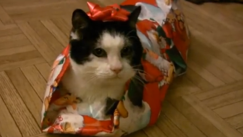 How to Wrap a Cat for Christmas   StyleCaster