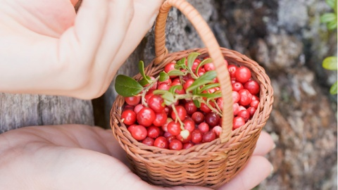 Can a Berry Help You Lose Weight? | StyleCaster