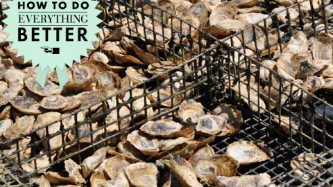 How To Do Everything Better: Shuck Oysters Like a Master   StyleCaster