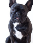 The 20 Best Animal Instagrams
