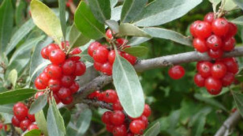 What in the World is a Buffaloberry? | StyleCaster