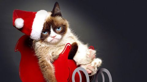 The Voice of Grumpy Cat, Revealed! | StyleCaster