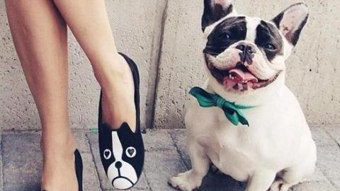 French Bulldogs are Having a Moment | StyleCaster