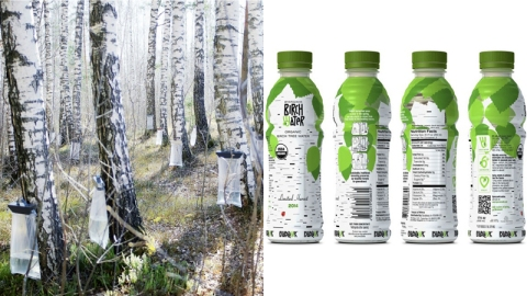 Is Birch Sap the New Coconut Water? | StyleCaster
