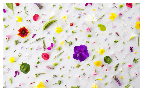 10 Adorable Desktop Wallpapers To Spice Up Your Laptop Stylecaster
