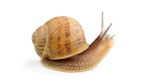 Snail Goo & Other Gross Ingredients In Your Beauty Products | StyleCaster