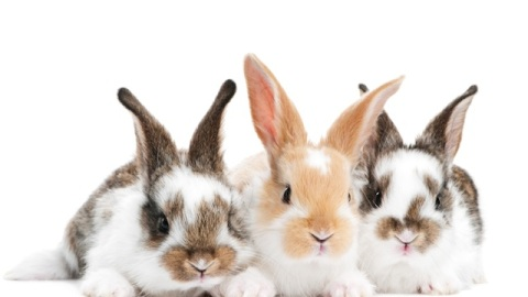 Beauty Buzz: China Adjusting Animal Testing, Solution For Fine Hair, More   StyleCaster