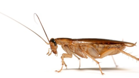 Beauty Buzz: Cockroaches in Your Beauty Products, L'Oreal Kiosks in Subways, More   StyleCaster
