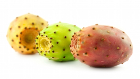 Why You Need Prickly Pear Products | StyleCaster
