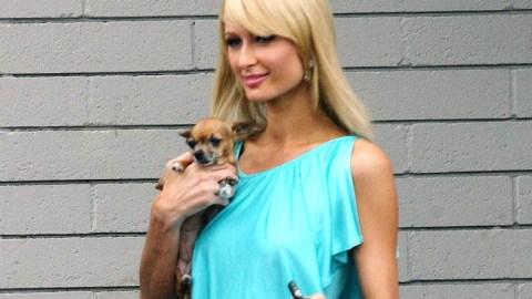 RIP Tinkerbell: Paris Hilton's Dog Died | StyleCaster