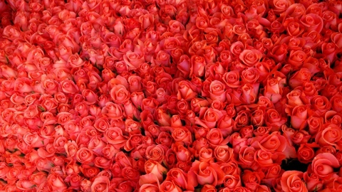 What's So Great About Rose Oil? | StyleCaster