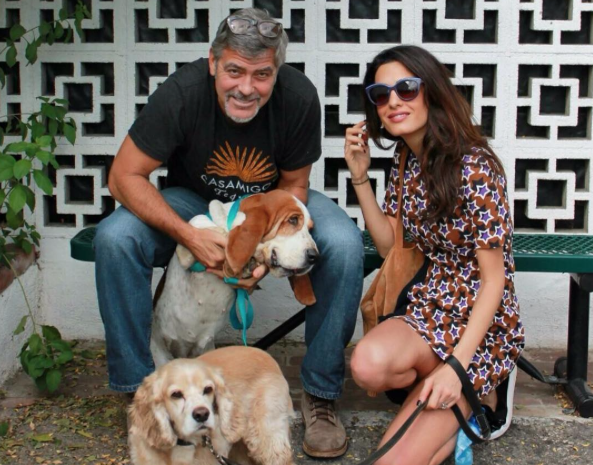 George and Amal Clooney adopt dog