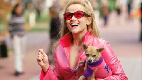 Is 'Legally Blonde 3' Going to Happen? | StyleCaster