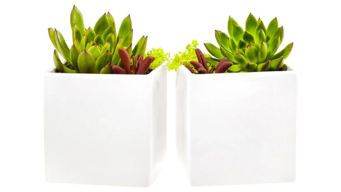 Can a Plant Change Your Life? | StyleCaster