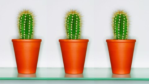 What's the Deal With Cactus Water? | StyleCaster