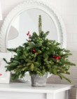 Deck Your Hall with These Gorgeous Christmas Tree Ideas