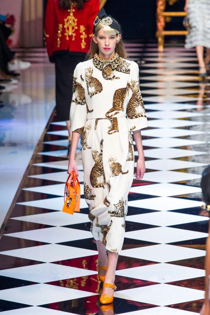 D&G's cat-print dress. (ImaxTree)