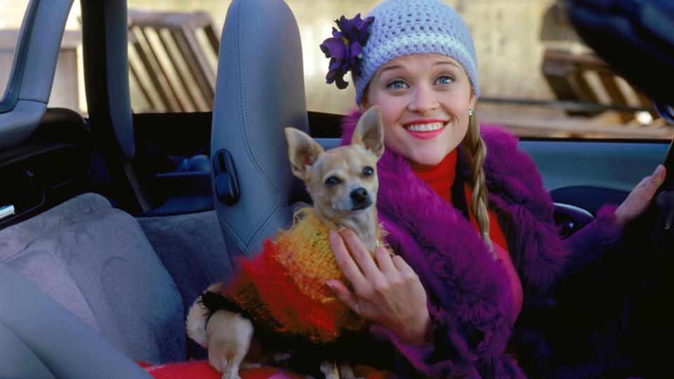 elle woods bruiser RIP Bruiser: Elle Woods Beloved Dog Has Passed Away
