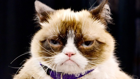 Behold: A New Study Every Single Cat Owner Will Identify With | StyleCaster