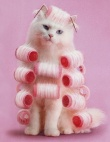 Beauty Lessons We Learned From Cats
