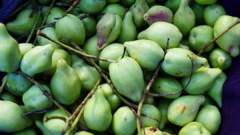 The Amazing Skin Benefits of Kakadu Plum | StyleCaster