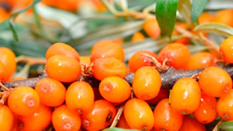 4 Reasons to Try Sea Buckthorn Oil | StyleCaster