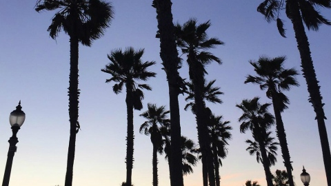 Your Complete Instagram Guide to L.A. | StyleCaster