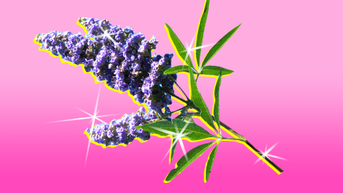 This Natural Herb Could Be the Answer to Your Period Pain Issues | StyleCaster
