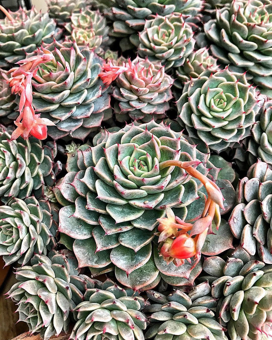 @cactus.man