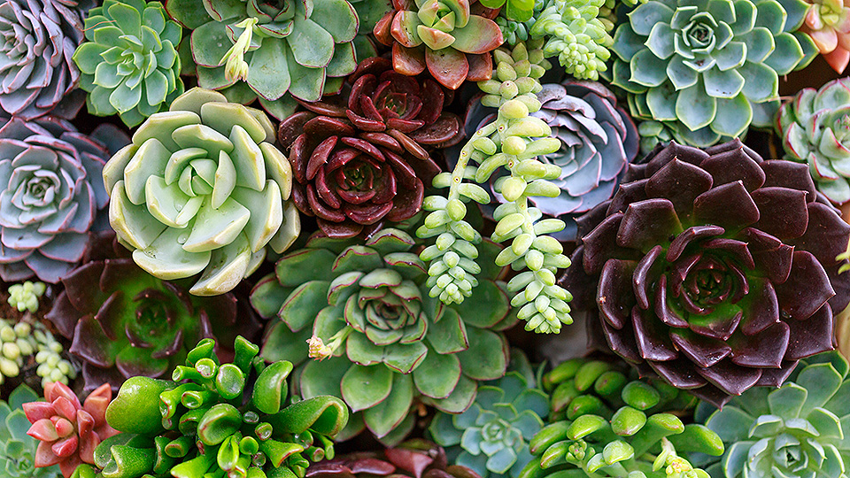Your A-to-Z Guide to Creating a Stylish Succulent Collection