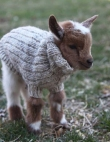 31 Adorable Animals in Sweaters to Cure Your Winter Blues