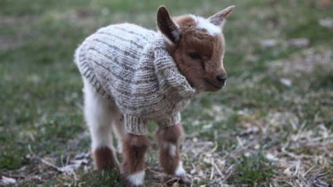 31 Adorable Animals in Sweaters to Cure Your Winter Blues   StyleCaster