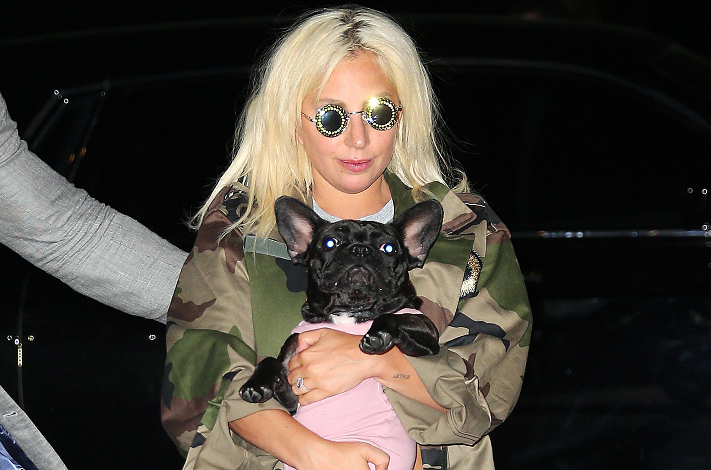 The 22 Cutest Celebrity Pets