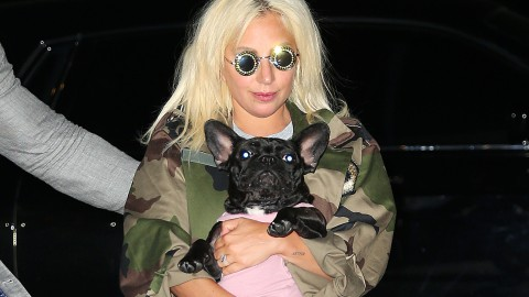 These Celebrity Pets Are Stealing the Limelight | StyleCaster
