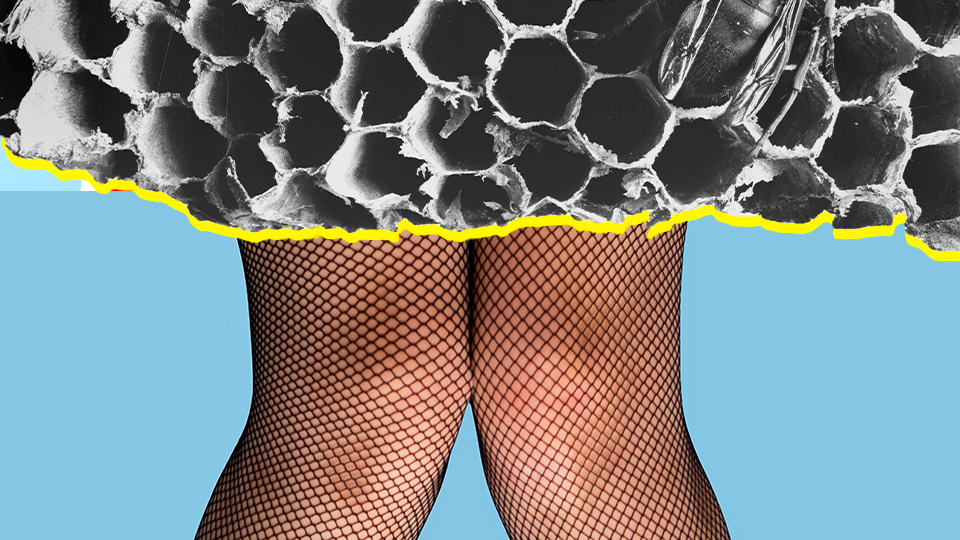don't put wasp nest in vagina