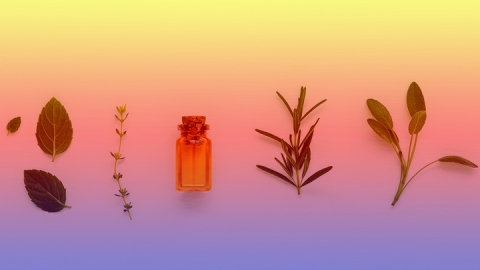 9 Powerful Plant Extracts You Need to Add to Your Skin Care Routine   StyleCaster