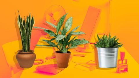 9 Adorable Office Plants that Will Chic up Any Workspace | StyleCaster