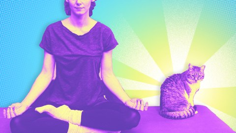 A Comprehensive Strategy for Making the Most of Your Cat Yoga Trip | StyleCaster